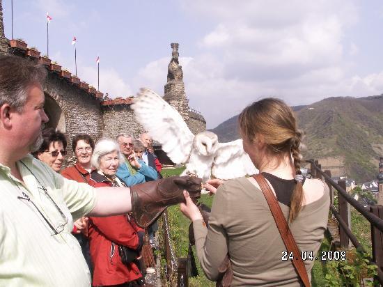Reichsburg: Owl in flight on the bird of prey show