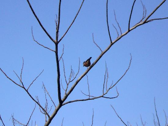 Tokutomi Roka Memorial Museum of Literature : Bird from cafe / 喫茶室から見た野鳥