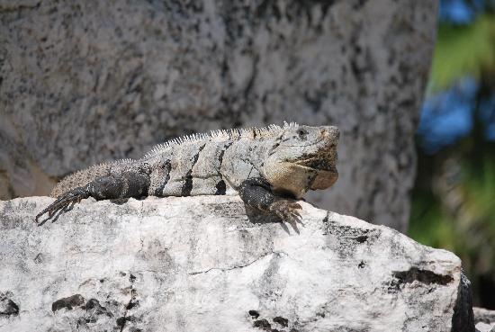 Sandos Playacar Beach Resort: local wildlife