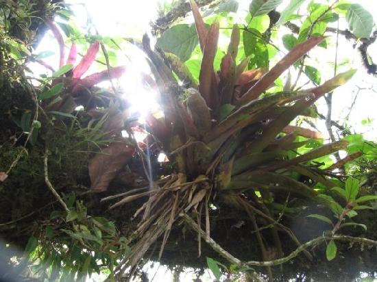 Finca La Nueva Esperanza: Epiphyte