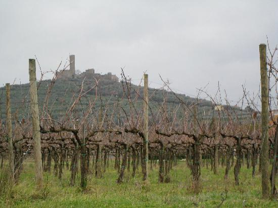 Agriturismo La Pievuccia: Winery