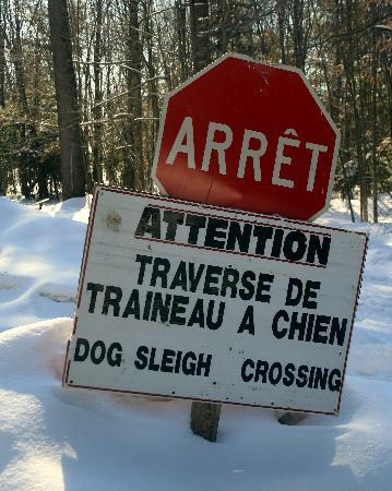 Montebello, Canada: Dog Sleigh Crossing