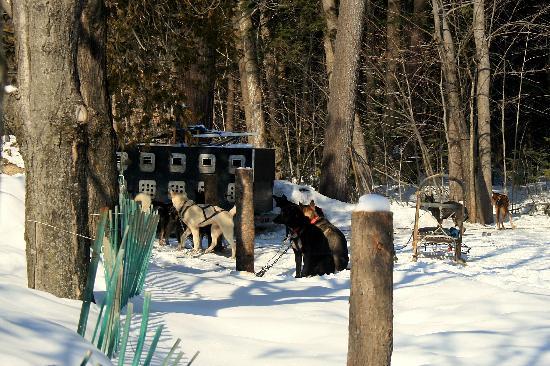 Montebello, Canada: Dogs and Sleigh