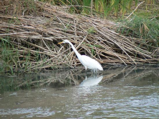 San Jose's Estuary and Bird Sanctuary: egret