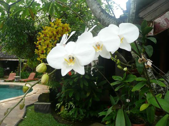 Tamukami Hotel: Garden