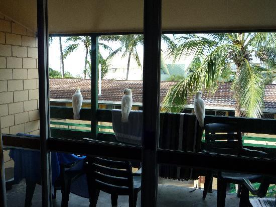 Airlie Beach YHA: Birds