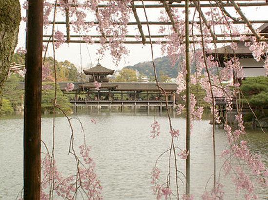 كيوتو, اليابان: 神苑の桜