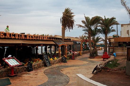 Penguin Village