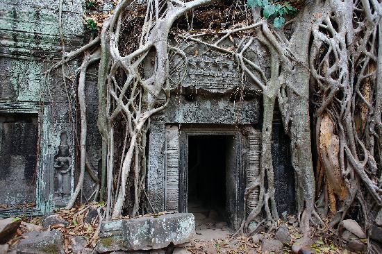 Siem Reap, Cambodia: Ta Prohm at Angkor