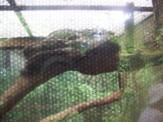 Veragua Rainforest Park: A Giant Boa Constrictor