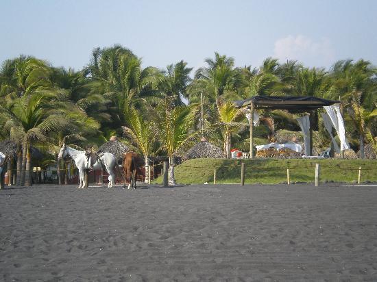 Hotel Soleil Pacifico: Beach