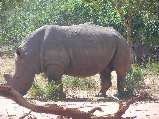 Ajai Game Reserve: Rhino (plans are to reintroduce this animal to the reserve)