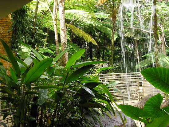 Bosque Nacional El Yunque, Puerto Rico: waterfall in rain forest center