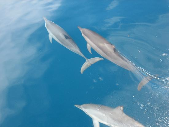 Lalati Resort & Spa: The Dolphins on the way over