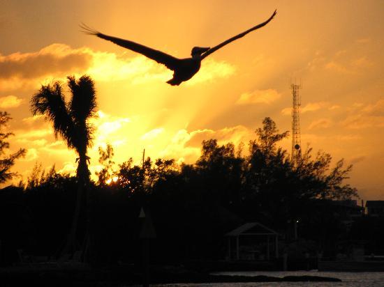 Blackfin Resort and Marina: Sunset View at Blackfin