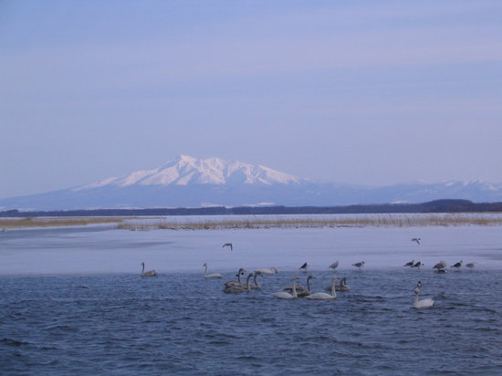 Tofutsuko Lake: 白鳥公園と斜里岳