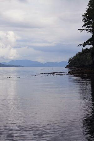 Telegraph Cove Resort: Orca Family
