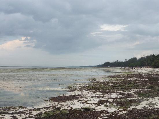 Jacaranda Indian Ocean Beach Resort: La plage des autres hotels de Diani à marée basse