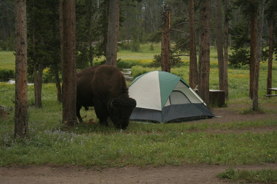 Photo of Norris Campground Yellowstone National Park