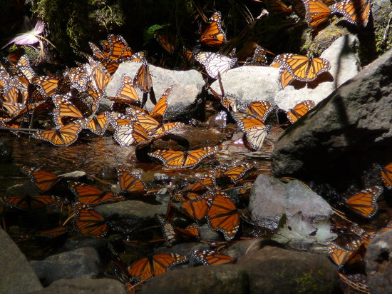 Sierra Chincua Butterfly Sanctuary