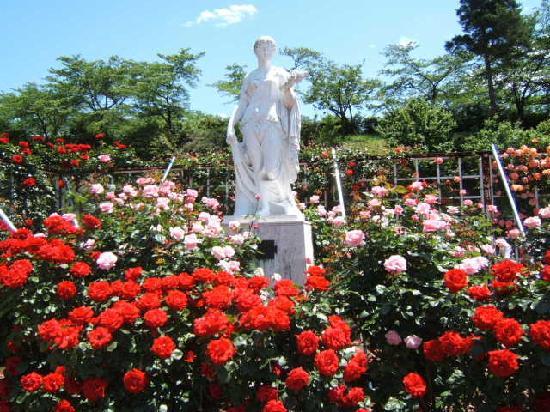 Ikuta Ryokuchi Rose Garden : 皇室等にちなむバラを集めたロイヤルコーナー