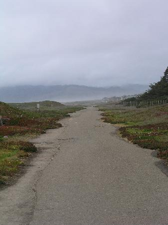 MacKerricher State Park: The old logging road offers an easy coast walk before giving way to coastal erosion and sand dun
