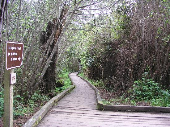 MacKerricher State Park: La Laguna Trail around Lake Cleone offers a boardwalk for part of the way.
