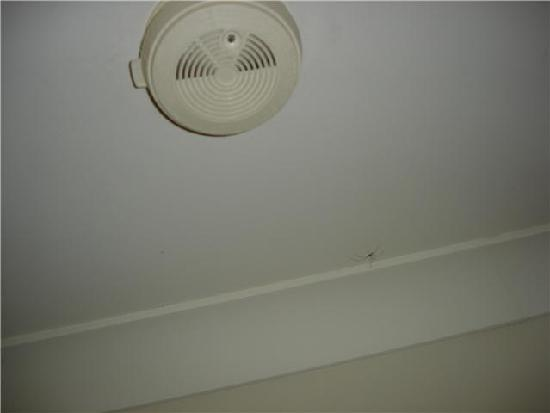 Byron Lakeside Apartments: The Spider