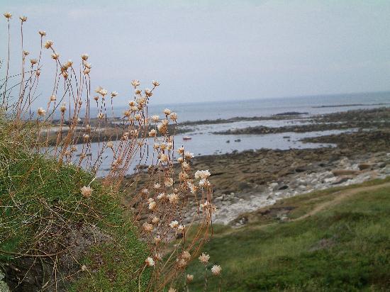 Ile de Batz : côte Nord de l'ïle