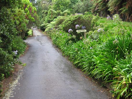 Egmont Eco Lodge: Greenery along the driveway -- so inviting.