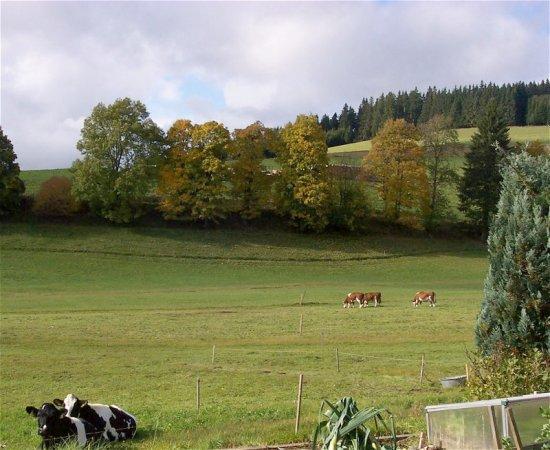 Pension Broghammer : Beautiful location in Jostal