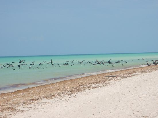 Villas Chimay: Spiaggia