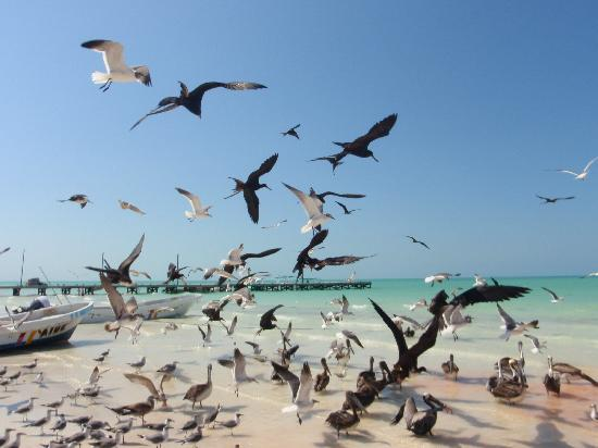 Villas Chimay: Gli uccelli di Holbox