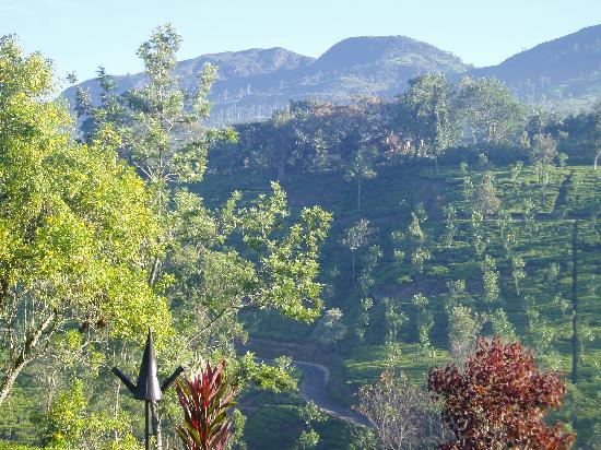 Ceylon Tea Trails: View from terrace