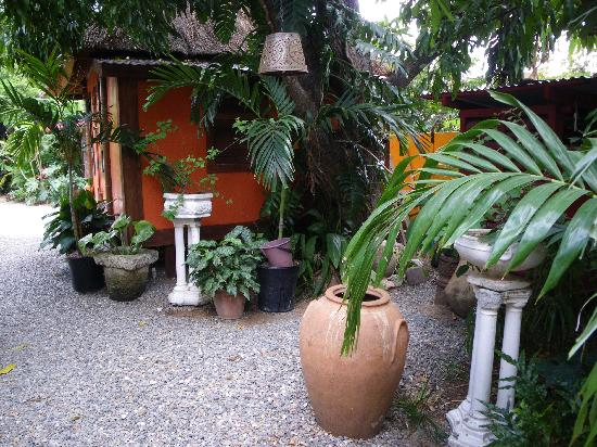 Mikuzi Kingston : Nicely landscaped pathway to rooms
