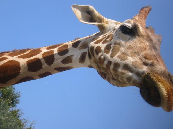 Gunma Safari Park : 入りきりません