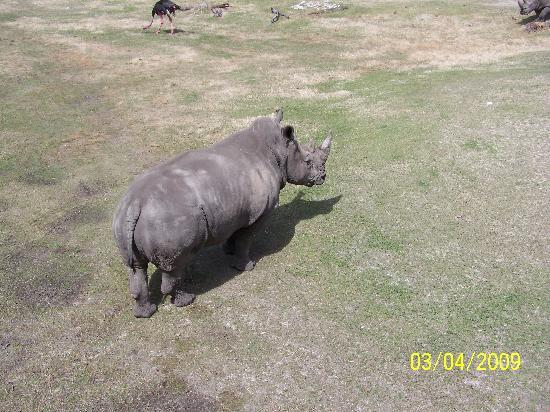 Jacksonville Zoo & Gardens : Rhino