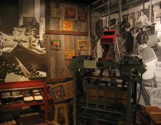 Riverside Metropolitan Museum : showing the area's early citrus industry