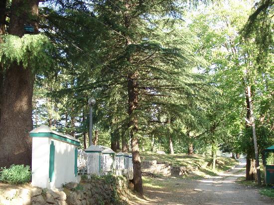 Hotel Bhagsu - HPTDC: Path outside the Bhagsu