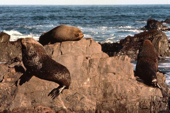 ولينجتون, نيوزيلندا: Seals on the Wellington coast
