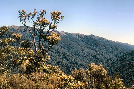 Wairarapa, New Zealand: Mount Holdsworth