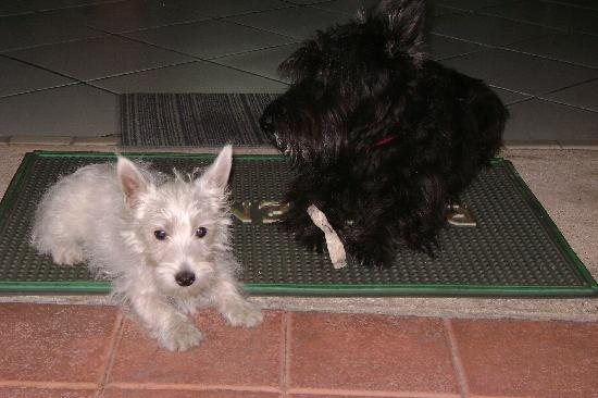 Hotel Mucuy: Lena (left) and Whiskey