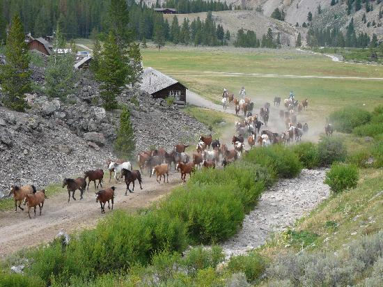 Elkhorn Ranch: Horses leaving the ranch for evening pasture.