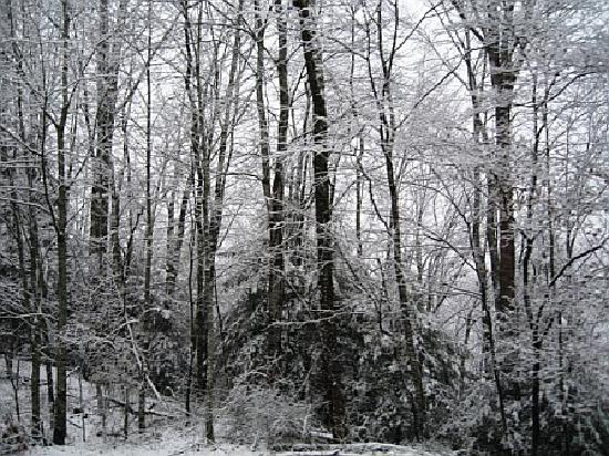 Mountain Vista Luxury Rentals: Snow covered trees near by.