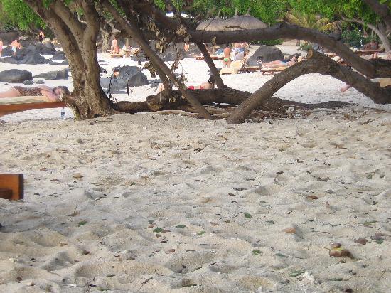 Club Med La Plantation d'Albion: petite vue de la plage