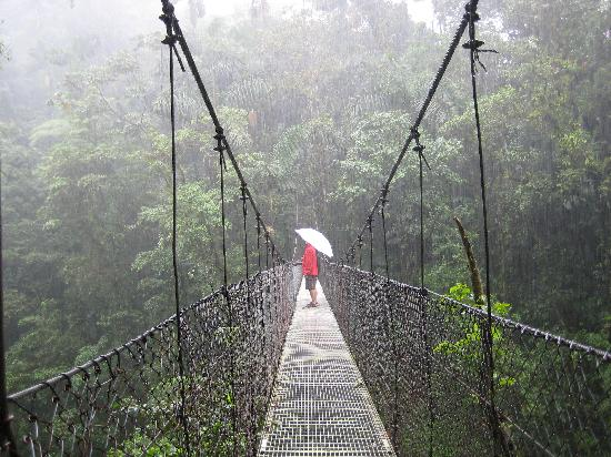 La Fortuna de San Carlos, Costa Rica: Hanging Bridges