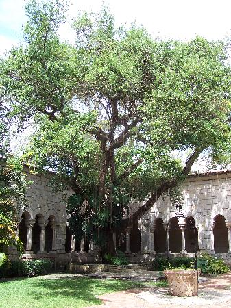 The Ancient Spanish Monastery: Banyan tree