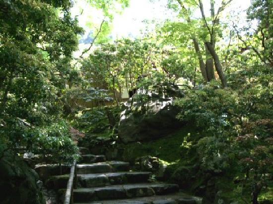 Rurikoin: 階段を上りながらの苔の感じが好き