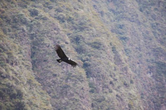 Imbabura Province, Équateur : heard about condors? @zuleta you will see them