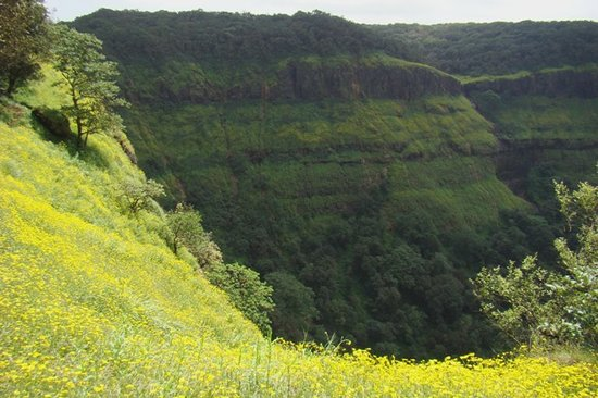 Matheran, India: Daisy carpeted hillsides